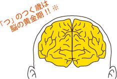 脳の黄金期イメージ